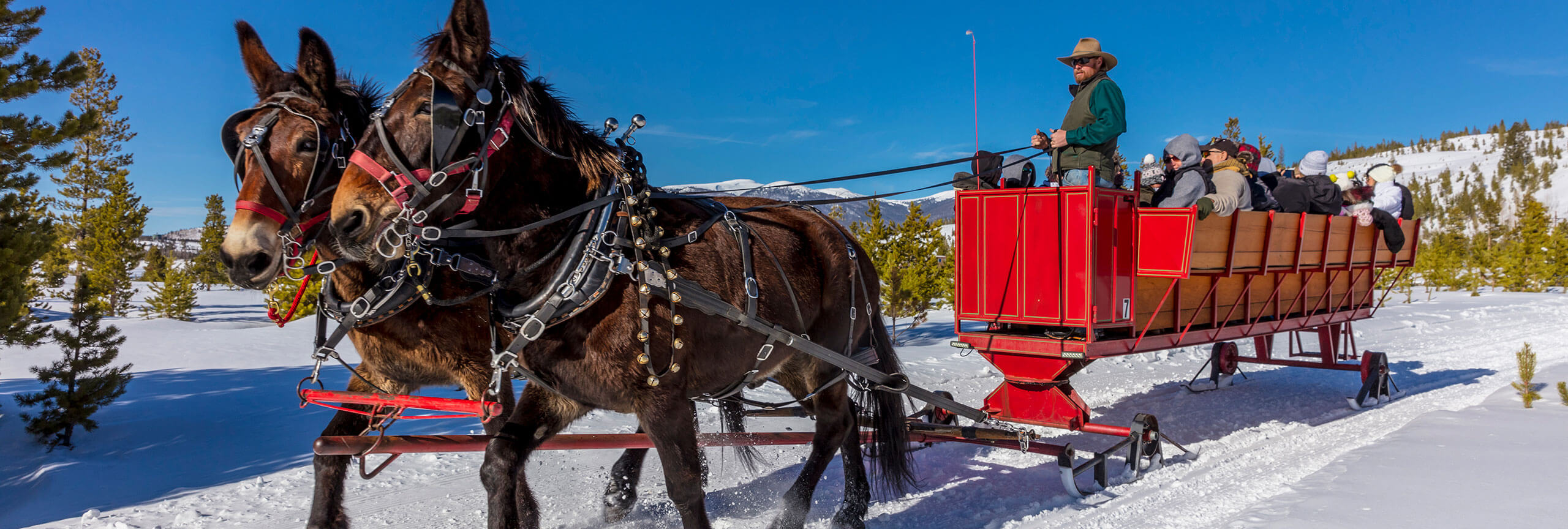 Two mules pulling red sleigh with people in it on snow