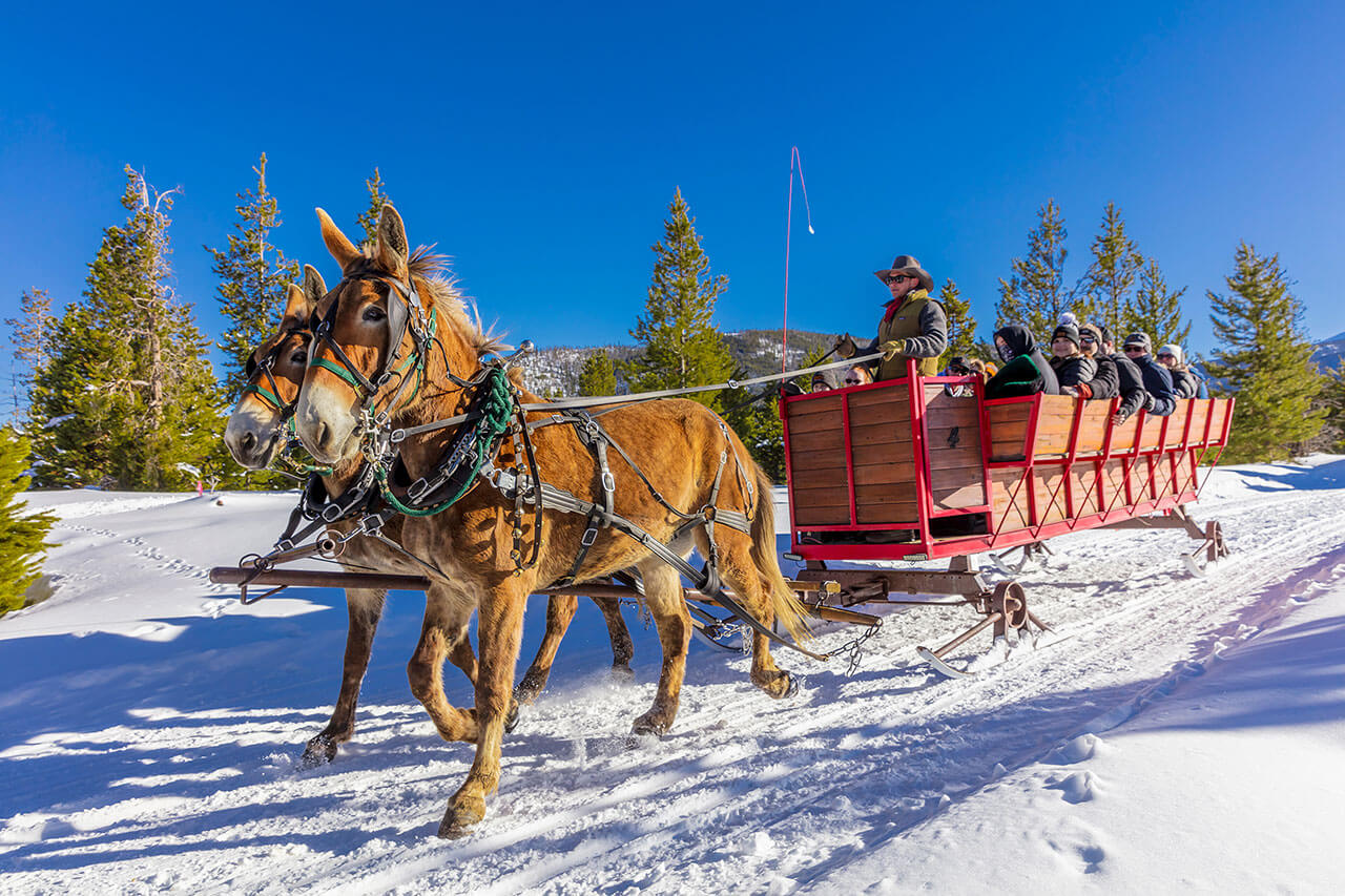 Two brown mules pulling sleigh with people in it on snow