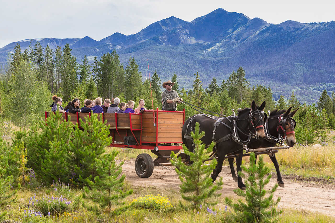 Group of people on chuck wagon ride on dirt road in summer